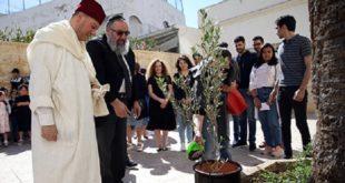 """Casablanca : Des jeunes musulmans plantent """"un olivier de la fraternité"""""""