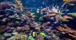Un million d'espèces menacées d'extinction : La survie de l'Homme en jeu