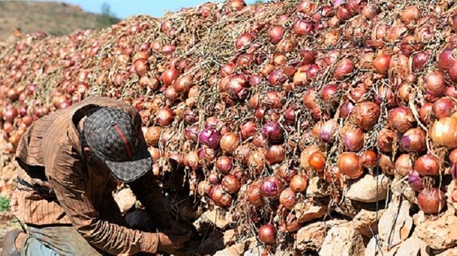 Prix de l'oignon : Le ministère de l'Agriculture s'explique