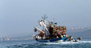 Petits pélagiques : Plan d'aménagement et inquiétudes sur la sardine !