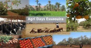 Les « Produits du terroir et de l'élevage » à l'honneur au Salon Agri Days Essaouira