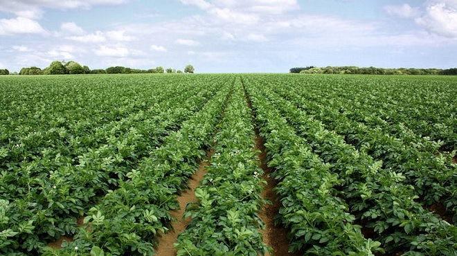 Benguerir : La question agricole au coeur des préoccupations