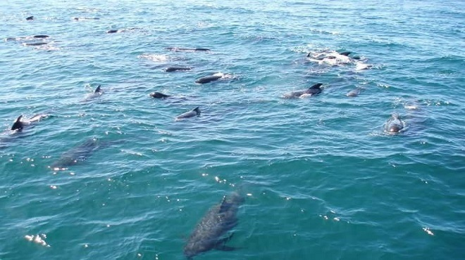 Méditerranée : Le «Negro», toujours empêcheur de pêcher en rond !