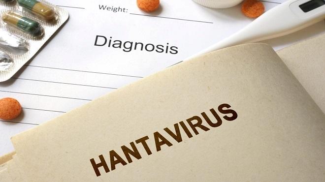 Hantavirus : Cette maladie virale qui crée la panique sur les réseaux sociaux