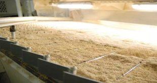 Agriculture | L'OCP contribue au développement de la filière du quinoa