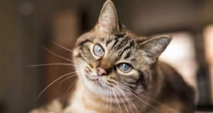 États-Unis | Deux chats malades du coronavirus à New York
