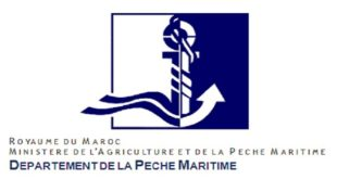 Apparition de la fausse méduse «la vélelle» dans les plages Méditerranéennes marocaines