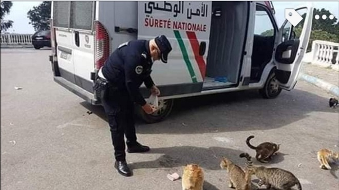 L'image du jour : Un policier marocain vole au secours de chats errants