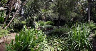 Gabon | Les forêts tropicales peuvent continuer à stocker de grandes quantités de carbone
