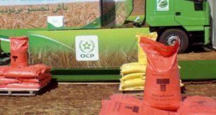OCP | Hausse des prix des engrais phosphatés