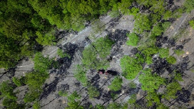 Bogota   La Colombie a perdu plus de 6,7M ha de forêts