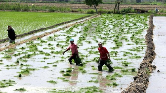 Sénégal | L'ANACIM Appel à se prémunir des informations météorologiques pour apprécier les dates de semis optimales