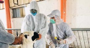 Aïd Al-Adha 2020 | Acheter son mouton en ligne