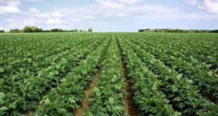 Allemagne | 480 employés placés en quarantaine dans une exploitation agricole