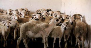 Célébrer Aïd Al Adha à l'ère de la Covid-19 | Les Marocains divisés