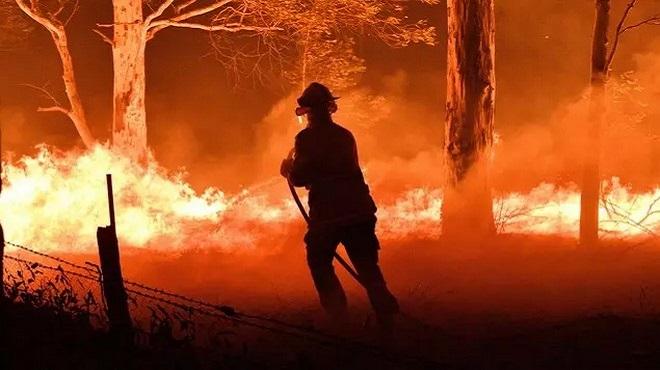 Mdiq-Fnideq | Le feu de forêt déclaré à Haouz Malaliyine maîtrisé