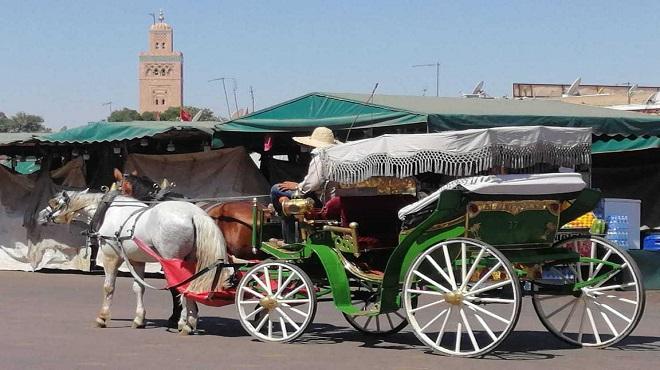 Les Cochers De Marrakech Agonisent En Silence