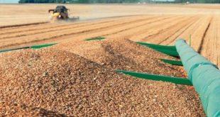 Le Maroc suspend les droits d'importation du blé tendre et dérivés
