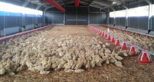 Grippe aviaire département des Landes