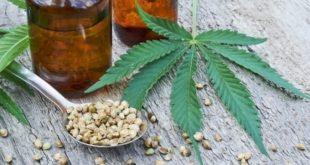 graines extraites du cannabis