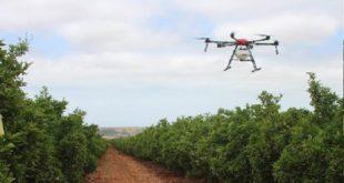 agrumiculture,drones,Agropole de Berkane