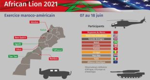 african lion 2021,african lion morocco