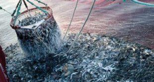 Contrebande de poulpe,pêche illicite